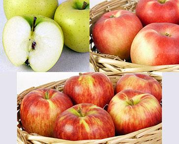 【予約】旬の葉とらずりんご詰め合わせ